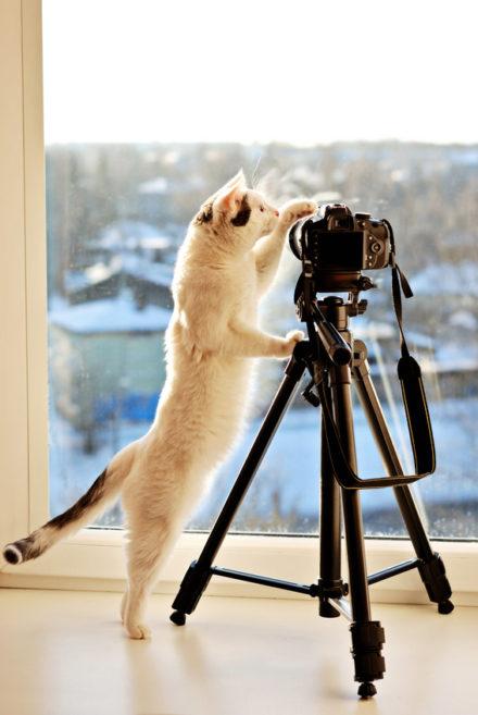 Katze mit Digitalkamera