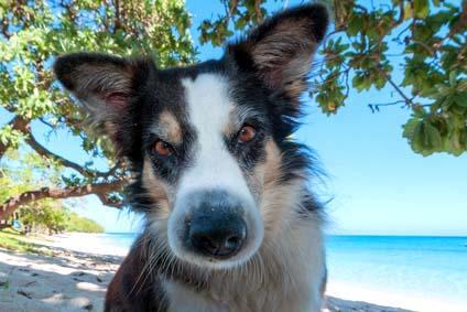 Aggressiver Hund? Schau ihm nicht in die Augen.
