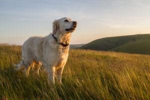 Zecken lauern auf Gräsern, im Gebüsch und Unterholz. Trotzdem darf man Hunden das geliebte Gassigehen nicht vorenthalten.