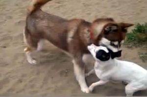 Die Hunde sollen es unter sich ausmachen