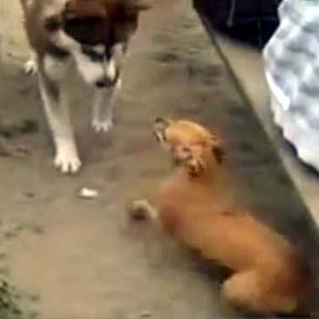 Mobbing unter Hunden. Manchmal brauchen Hunde die Unterstützung ihrer Menschen.