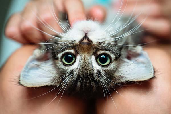 Kleine Katze: Welche Erstausstattung ist nötig?