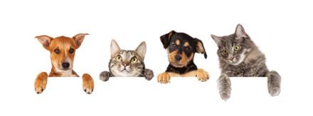 Wem gehören Hund und Katze nach der Scheidung?