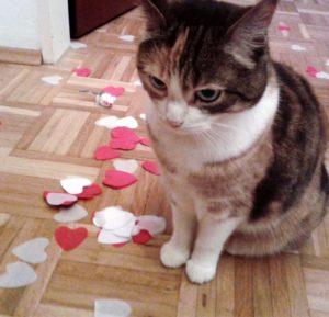 Die Umstellung des Katzenstreus ist geschafft.
