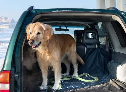 Hund im Auto: Hundehaare sind hartnäckig, sie verharken sich im Gewebe und lassen sich nur schwer entfernen.