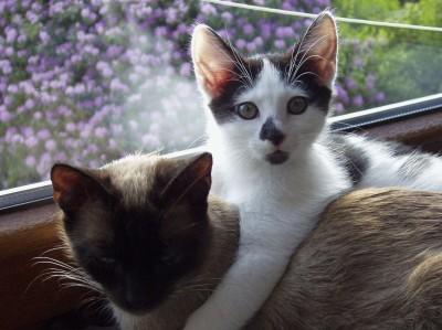 Welche Namen Katzen lieben