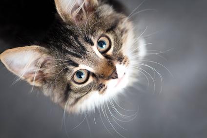 Mit ihren wundervollen Schnurrhaaren scannen Katzen ihre Umgebung. Nicht umsonst heißen diese Haare Tasthaare.