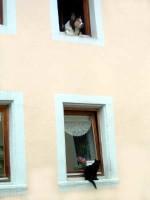 Katzen in Mietwohnungen