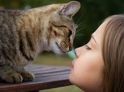 Katzenbegrüßung: Schnüffeln an der Nase