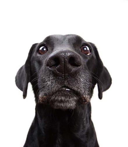 Keine Babysprache mit Hunden