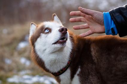 Hunde hassen es, von Fremden angefasst zu werden – womöglich auch noch von oben und über den Hund gebeugt