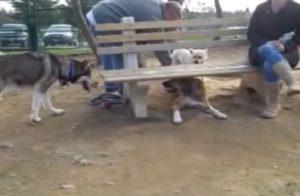 Mobbing unter Hunden: Der braune Hund versteckt sich unter der Bank.