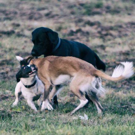 Mobbing unter Hunden: So greifst du ein.