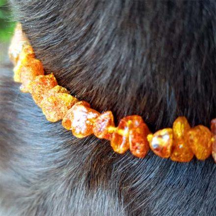 Hund Ronja mit Bernsteinkette