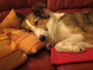 Secondhand-Hund-