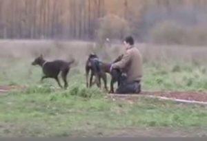 Mobbing unter Hunden kannst du beenden, wenn du deinen Hund demonstraativ berührst.
