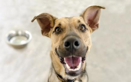 So sieht ein glücklicher Hund aus.