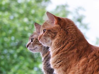Einzelhaltung - Katzen wollen mit Artgenossen zusammenleben