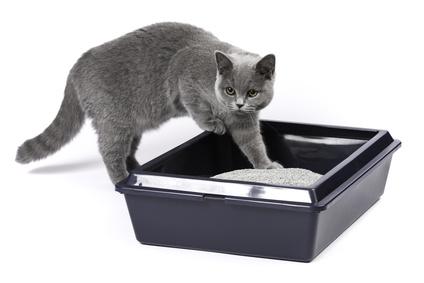 Tipps zum Katzenklo - damit deine Katze nicht an andere Stellen pinkelt