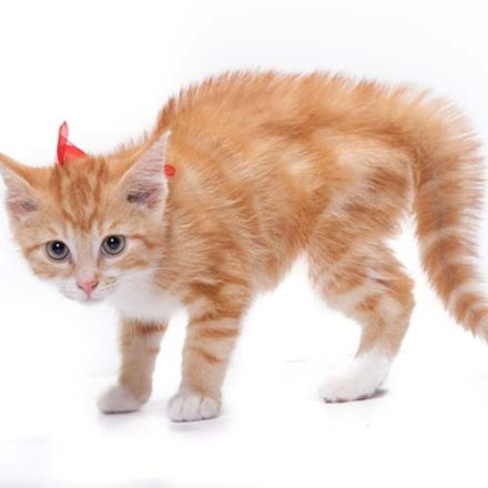 mgang mit ängstlichen Katzen