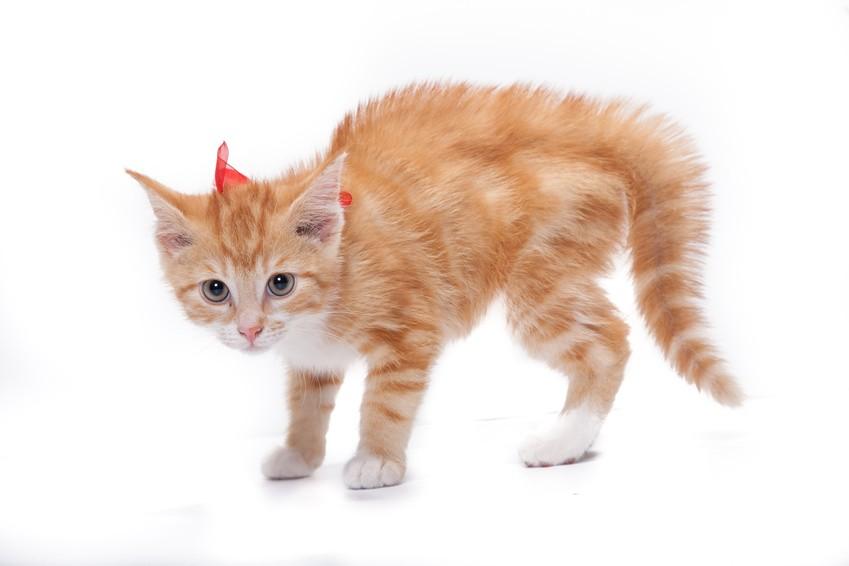 Kleines Kätzchen mit Katzenbuckel, gesträubtes Fell und starrer Blick zur Gefahr.