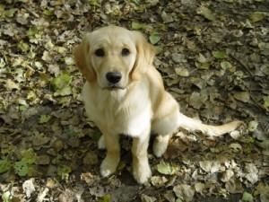 Warum manche Tierheim-Hunde schneller ein Zuhause finden