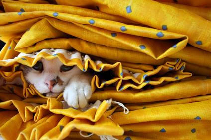 Katzen hassen, wenn du ihnen keinen Rückzugsort ermöglichst.