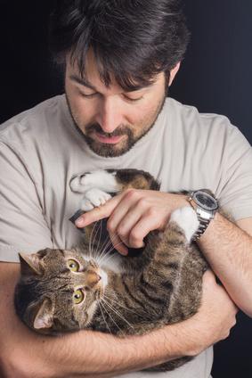 Häufiger Fehler in der Katzenhaltung: Katzen wie ein Baby tragen.