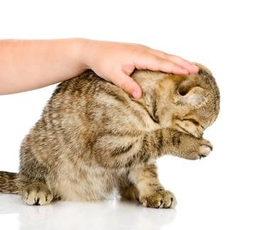 """Katze wird gestreichelt. Beginnt sich die Katze zu putzen, bedeutet das: """"Hör auf damit."""""""