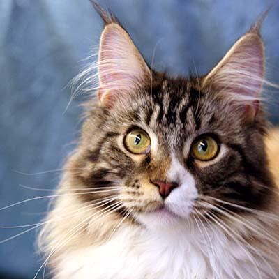 Was Katzen lieben: Zeit mit ihrem Menschen.