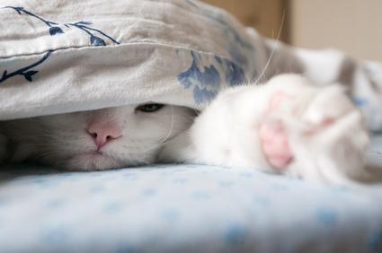 Was Katzen lieben: viele Wasserstellen