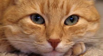 was kann man mit katzen spielen