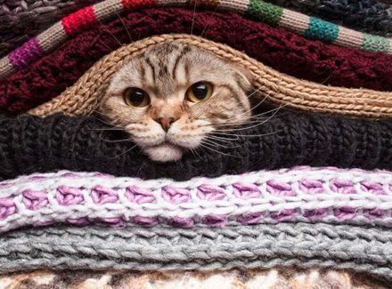 Auf den Lieblingsplätzen der Katze befinden sich die meisten Katzenhaare.