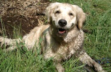 Wie oft darf man Hunde baden?